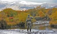 Fly fisherman standing in water, facing down-river with trees and autumn in background
