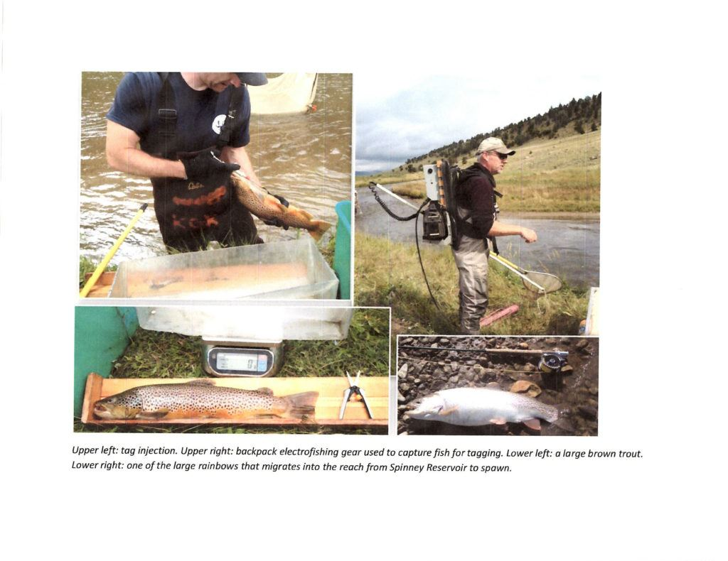 trout monitoring