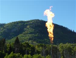 Trees with Methane Gas Burning